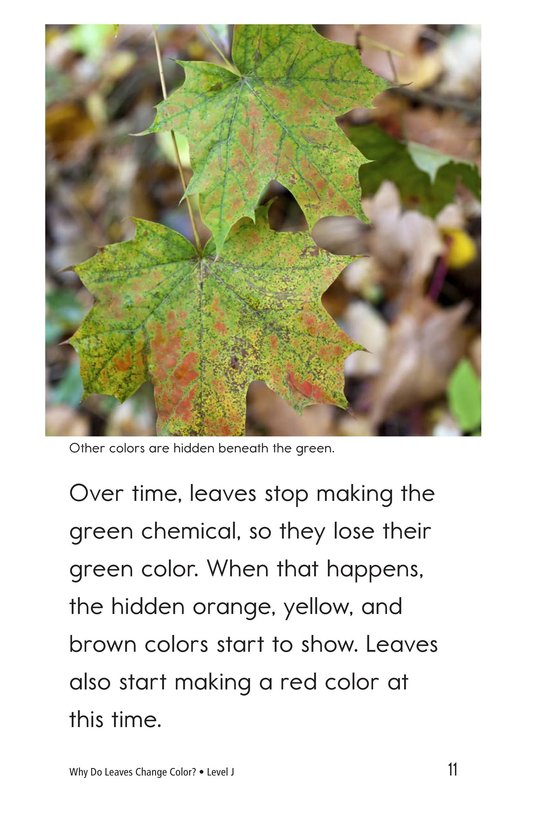 Book Preview For Why Do Leaves Change Color? Page 11
