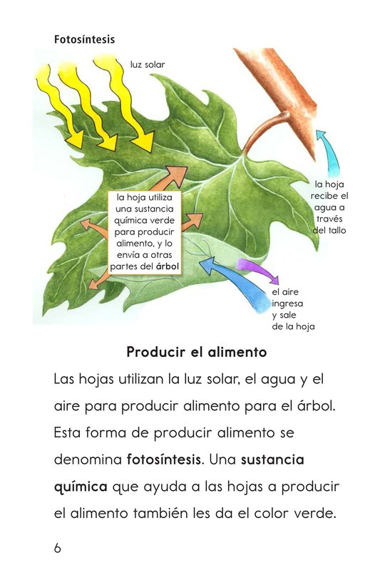Book Preview For Why Do Leaves Change Color? Page 6