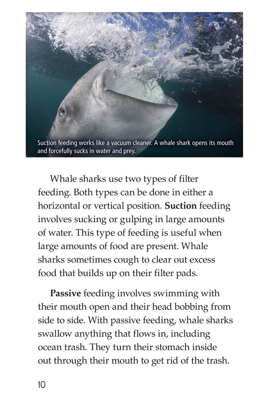 Book Preview For Whale Sharks: Giant Fish Page 10