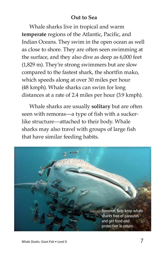Book Preview For Whale Sharks: Giant Fish Page 7