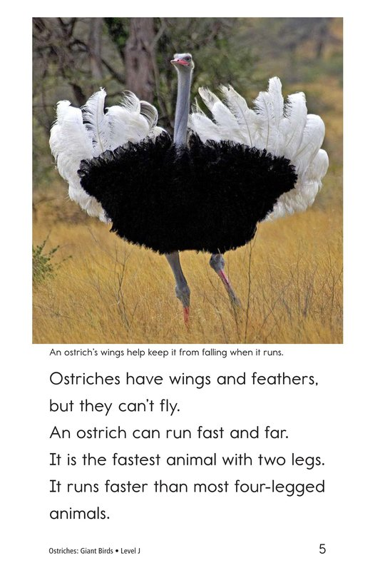 Book Preview For Ostriches: Giant Birds Page 5