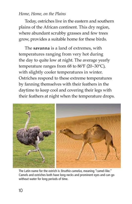 Book Preview For Ostriches: Giant Birds Page 10