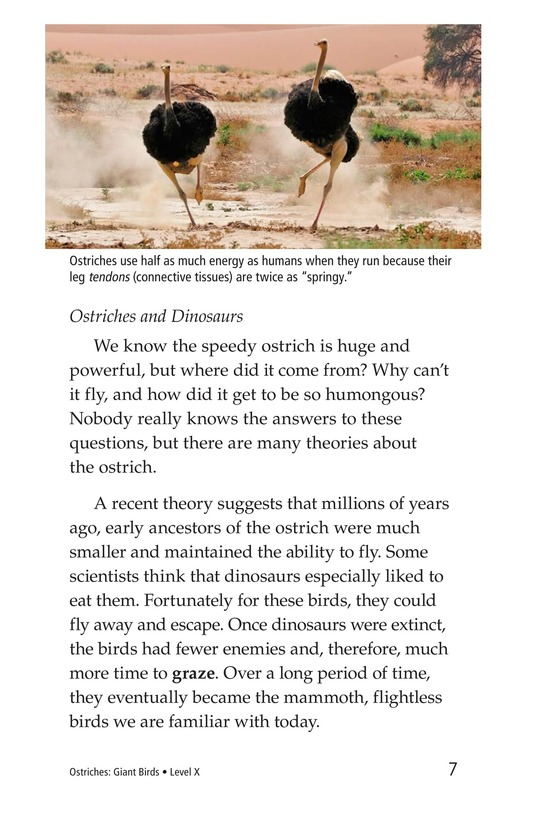 Book Preview For Ostriches: Giant Birds Page 7