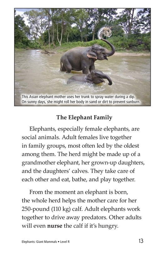 Book Preview For Elephants: Giant Mammals Page 13