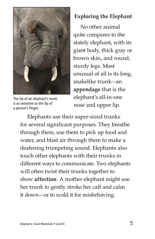 Book Preview For Elephants: Giant Mammals Page 5