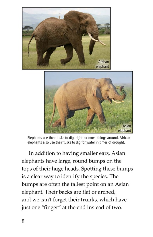 Book Preview For Elephants: Giant Mammals Page 8