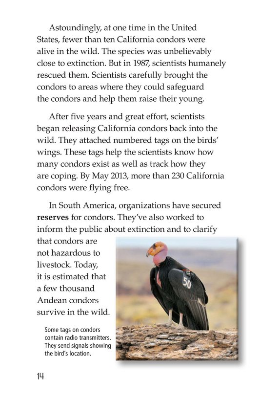 Book Preview For Condors: Giant Birds Page 14