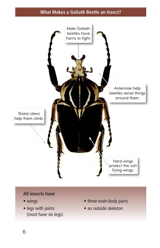 Book Preview For Goliath Beetles: Giant Insects Page 6