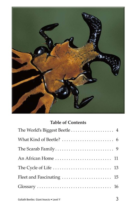 Book Preview For Goliath Beetles: Giant Insects Page 3