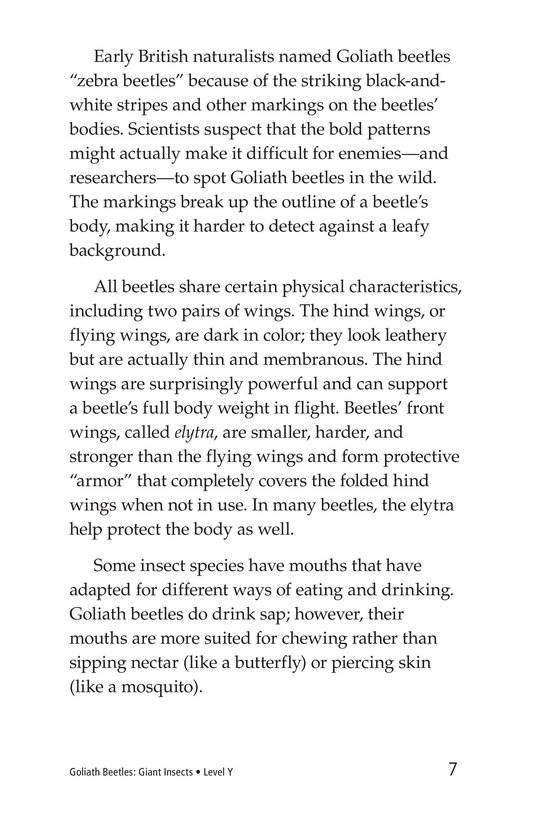 Book Preview For Goliath Beetles: Giant Insects Page 7