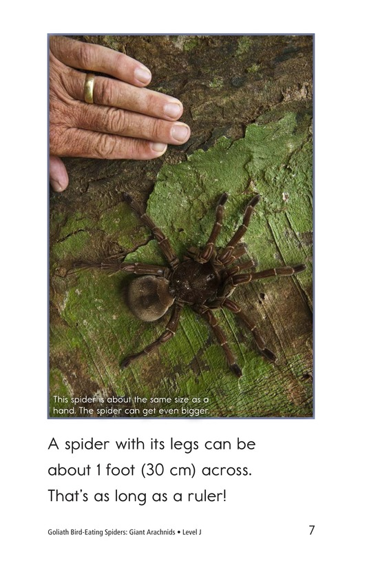 Book Preview For Goliath Bird-Eating Spiders: Giant Arachnids Page 7