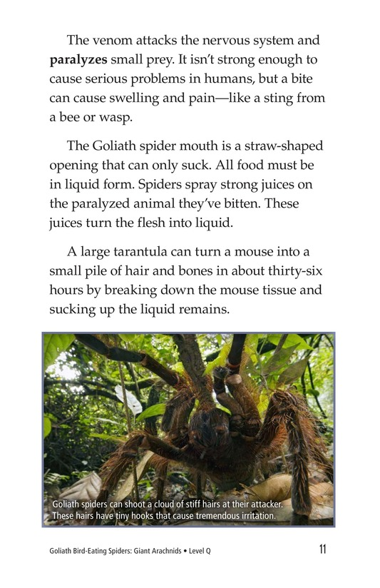 Book Preview For Goliath Bird-Eating Spiders: Giant Arachnids Page 11