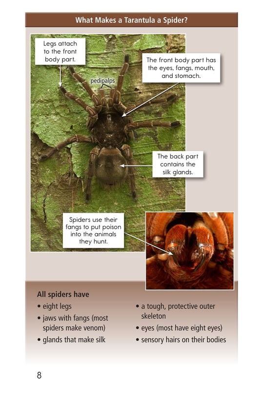 Book Preview For Goliath Bird-Eating Spiders: Giant Arachnids Page 8