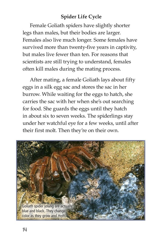 Book Preview For Goliath Bird-Eating Spiders: Giant Arachnids Page 14