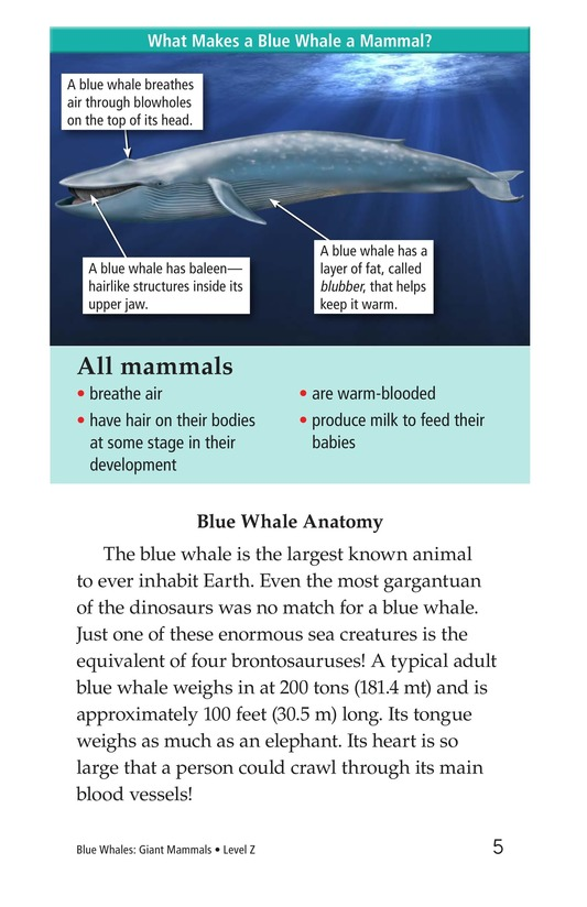 Book Preview For Blue Whales: Giant Mammals Page 5