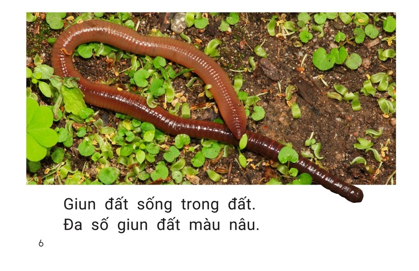 Book Preview For All About Earthworms Page 6