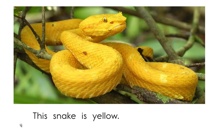 Book Preview For Snake Colors Page 4