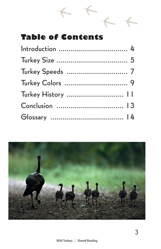 Book Preview For Wild Turkeys Page 3