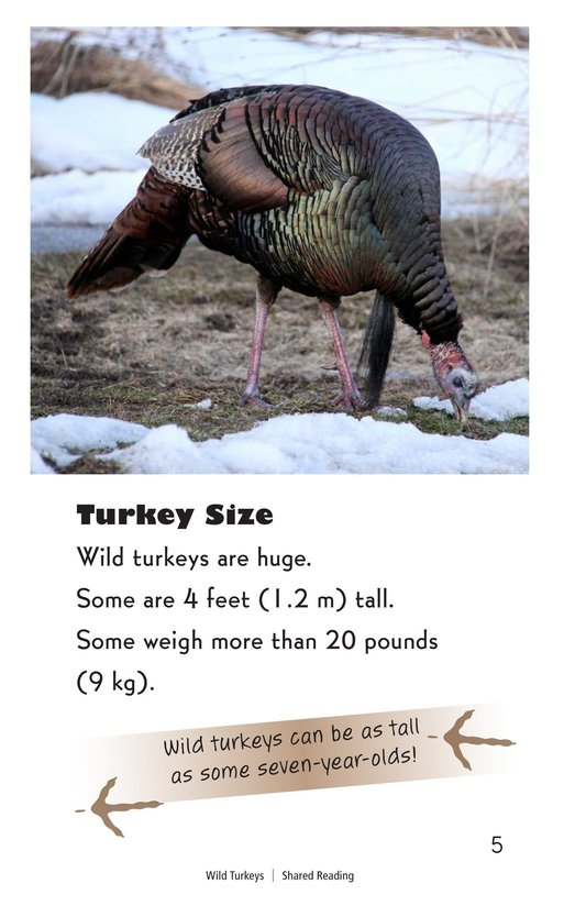 Book Preview For Wild Turkeys Page 5