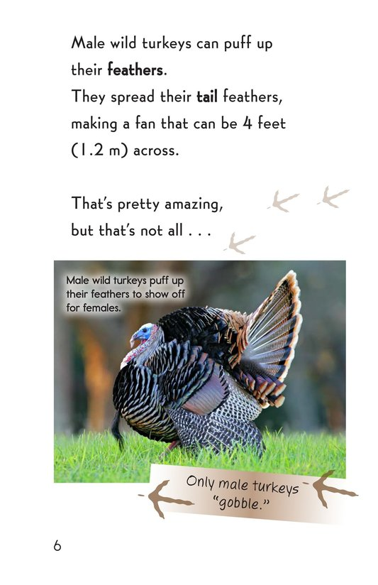 Book Preview For Wild Turkeys Page 6