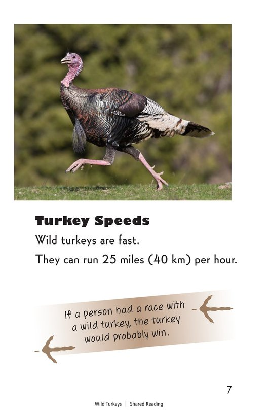 Book Preview For Wild Turkeys Page 7