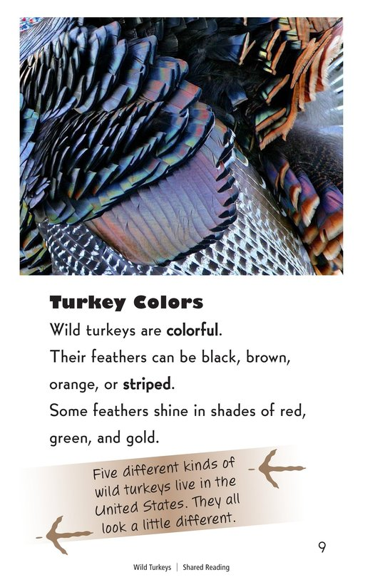 Book Preview For Wild Turkeys Page 9