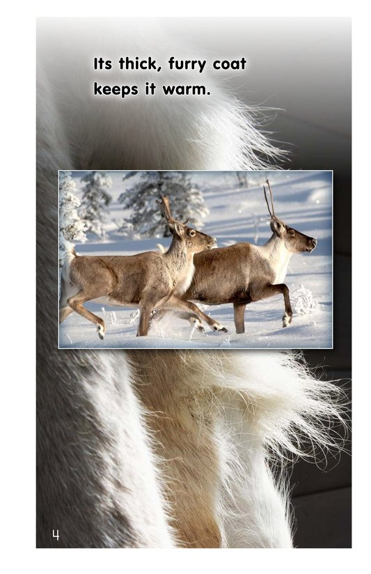 Book Preview For Reindeer Page 4