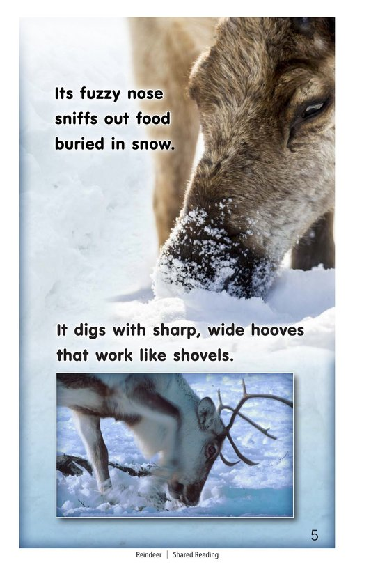 Book Preview For Reindeer Page 5