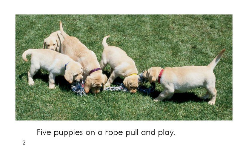 Book Preview For Puppies In, Puppies Out Page 2