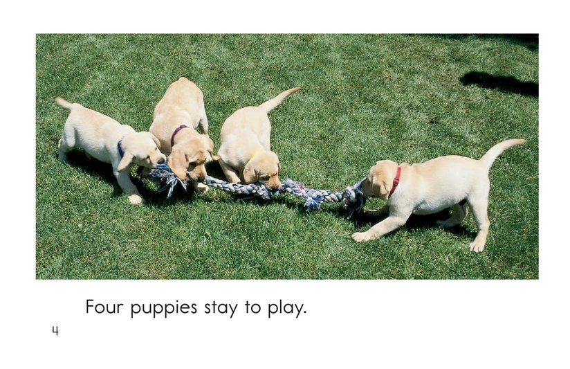 Book Preview For Puppies In, Puppies Out Page 4