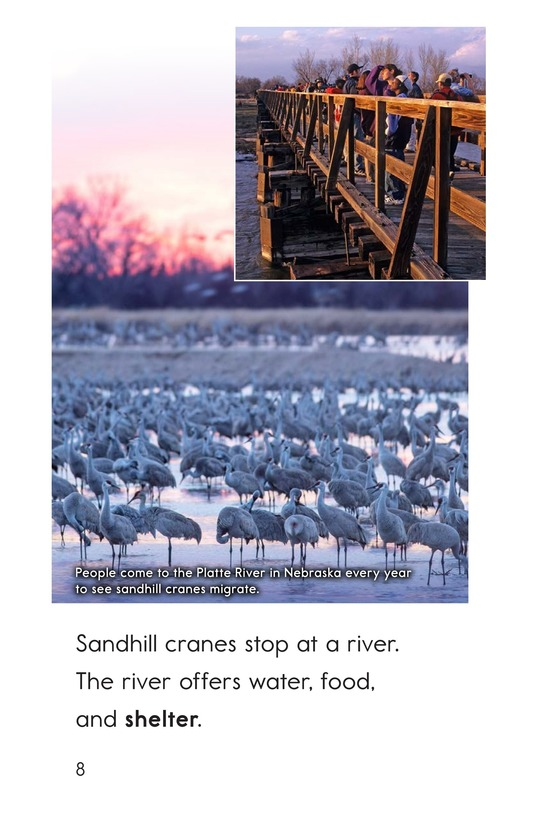 Book Preview For Here Come the Cranes! Page 8