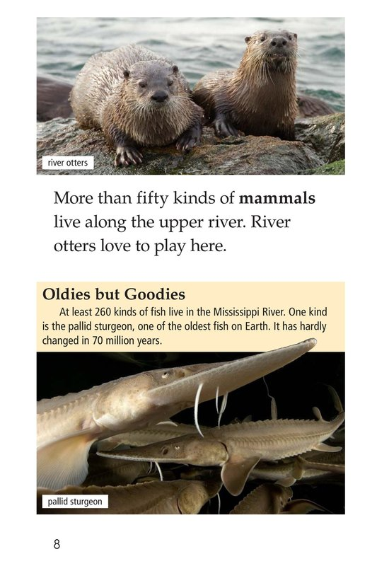 Book Preview For The Mighty Mississippi Page 8