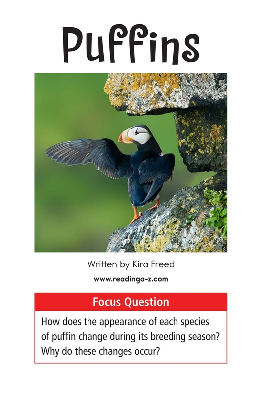 Book Preview For Puffins Page 1