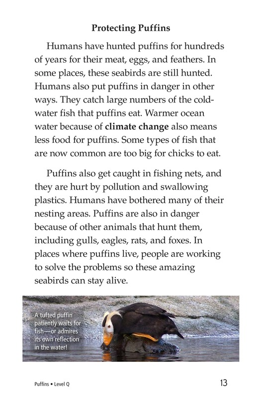 Book Preview For Puffins Page 13