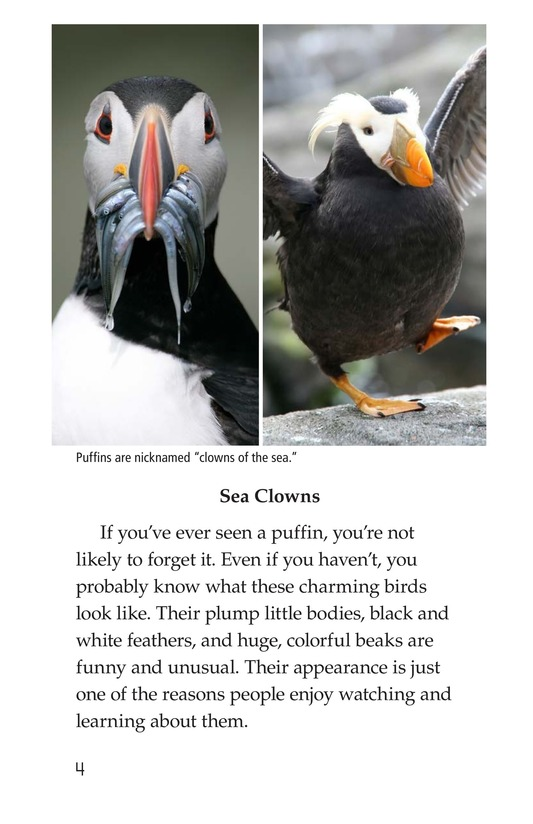 Book Preview For Puffins Page 4