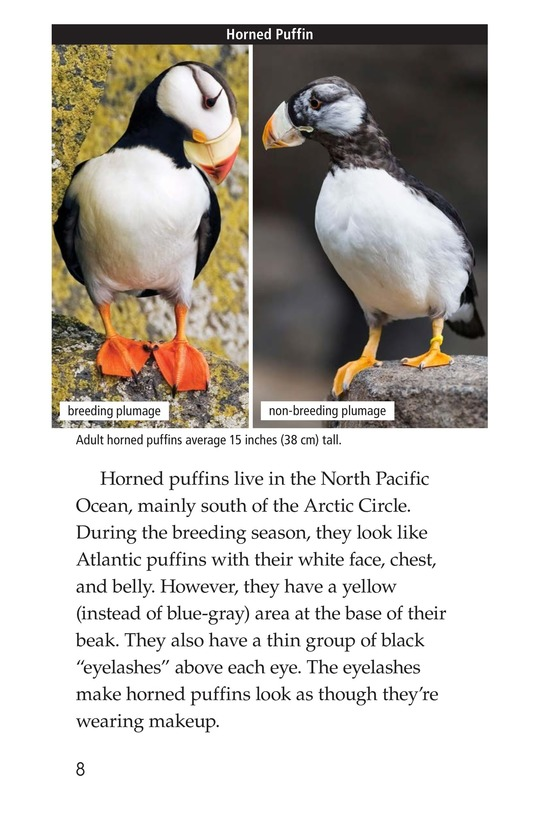 Book Preview For Puffins Page 8