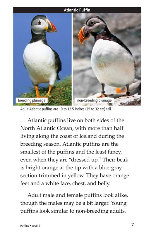 Book Preview For Puffins Page 7