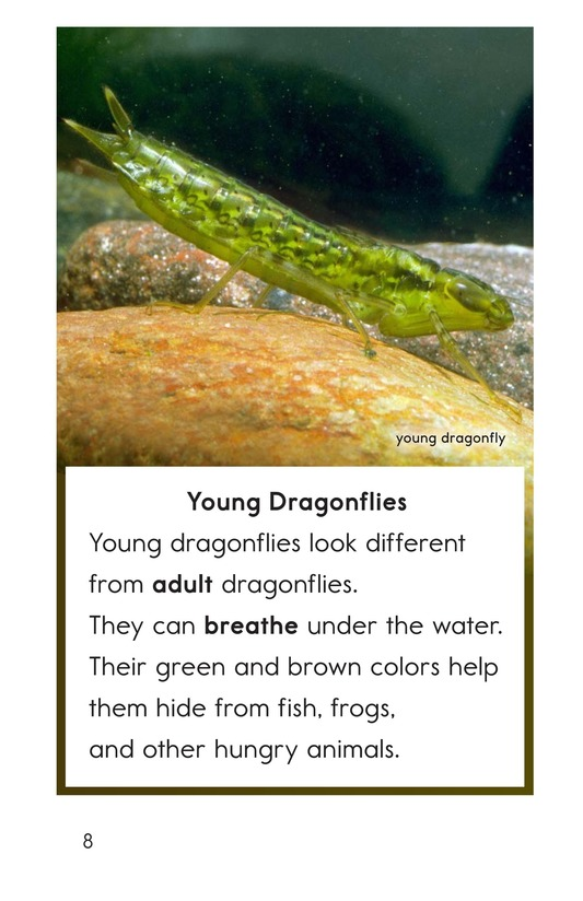 Book Preview For Dragonflies! Page 8