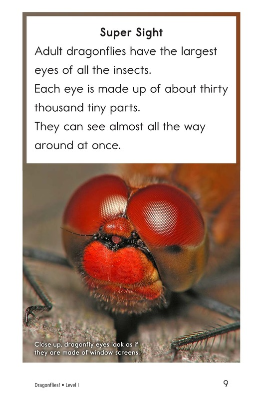 Book Preview For Dragonflies! Page 9