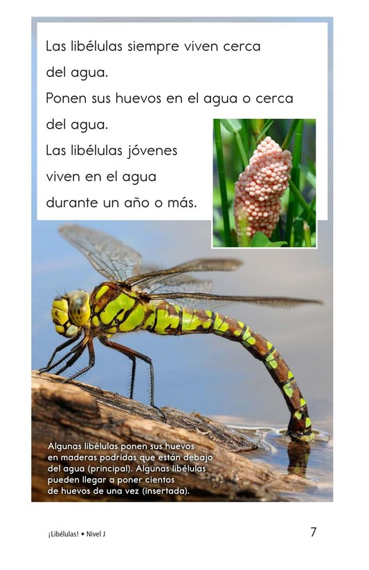 Book Preview For Dragonflies! Page 7