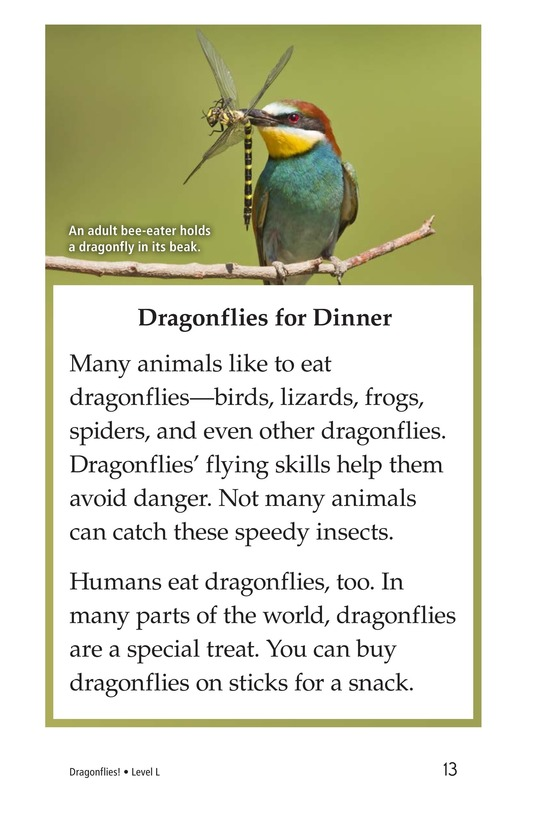 Book Preview For Dragonflies! Page 13