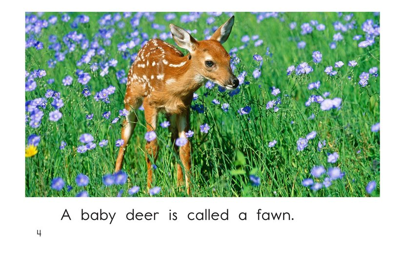 Book Preview For More Baby Animals Page 4