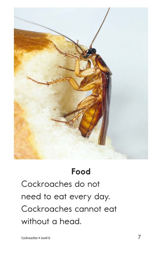 Book Preview For Cockroaches Page 7
