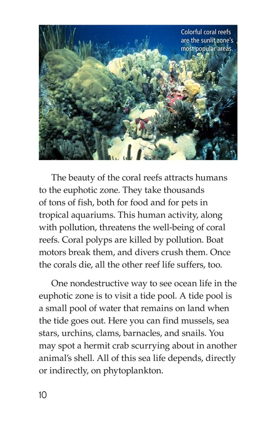 Book Preview For The Amazing Undersea Food Web Page 10