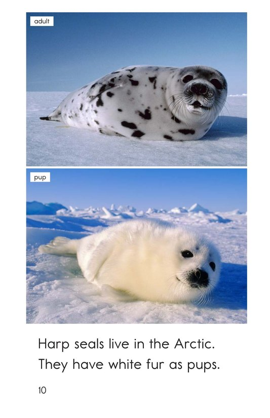Book Preview For Arctic Animals Page 10