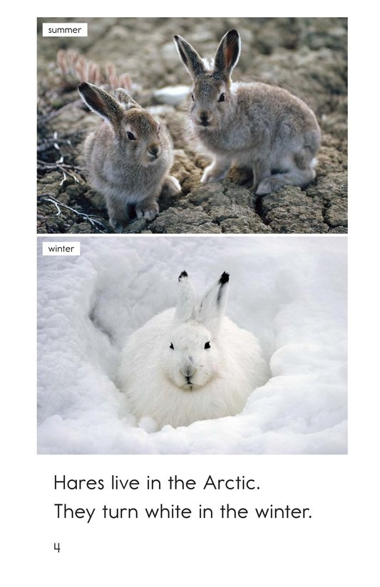 Book Preview For Arctic Animals Page 4