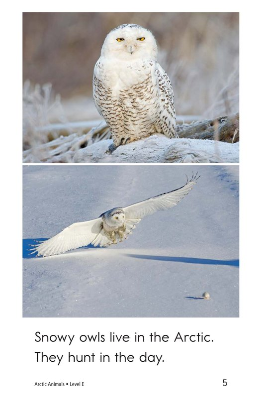 Book Preview For Arctic Animals Page 5