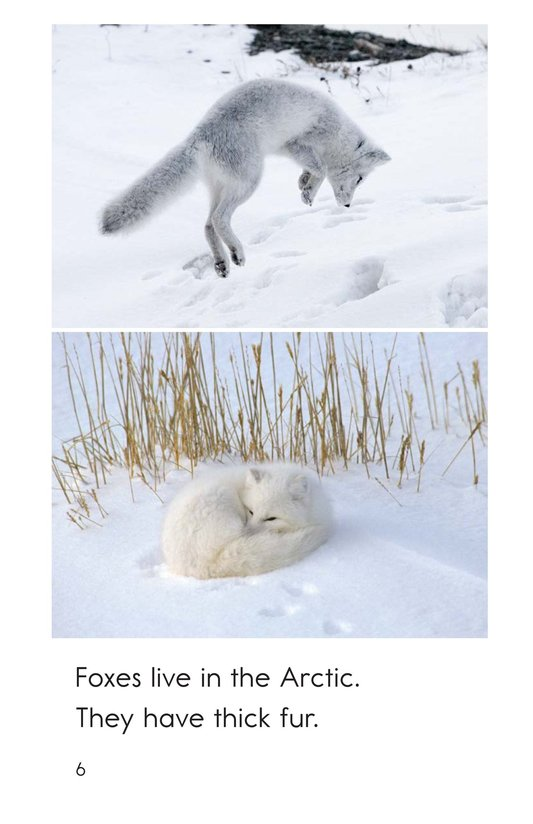 Book Preview For Arctic Animals Page 6