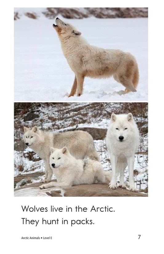 Book Preview For Arctic Animals Page 7