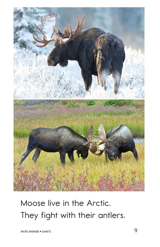 Book Preview For Arctic Animals Page 9